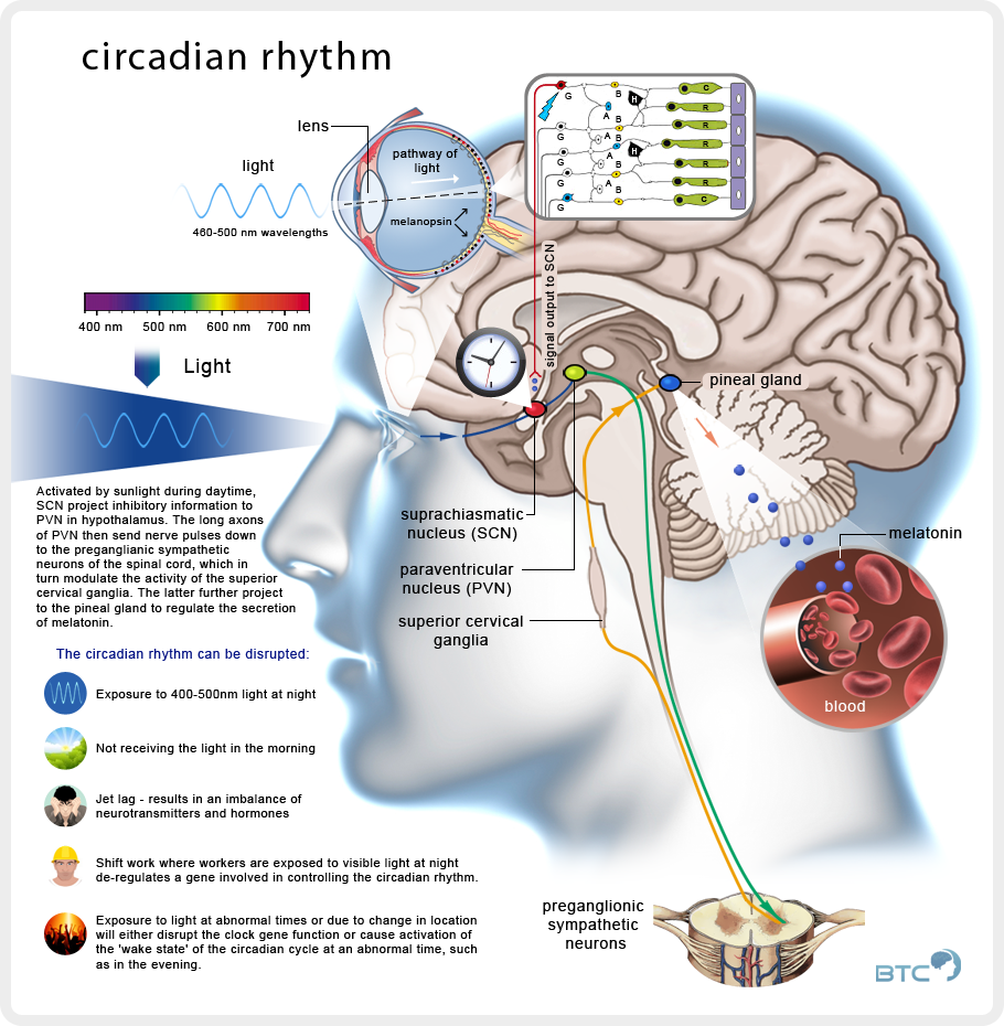 sleep_circadian_rhythm