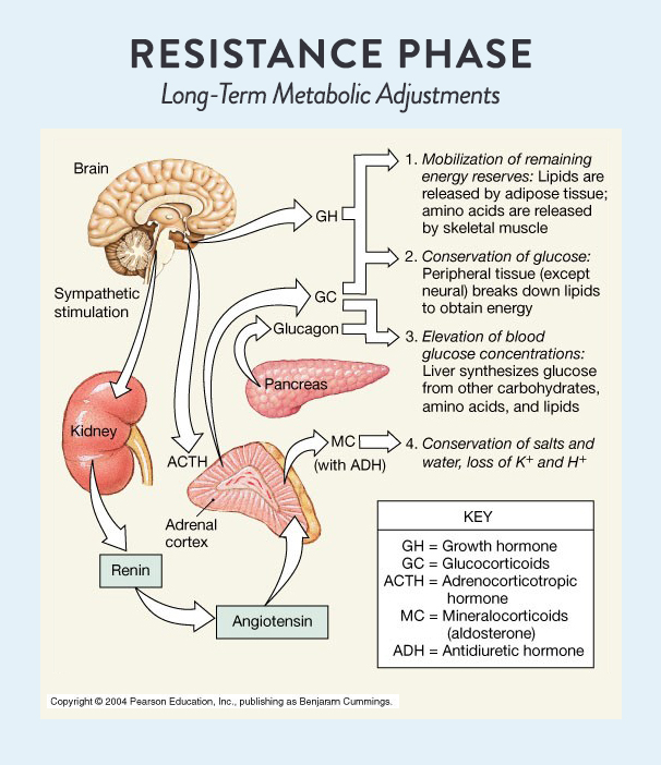 resistance phase
