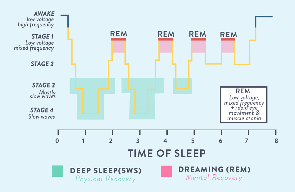 time of sleep stages