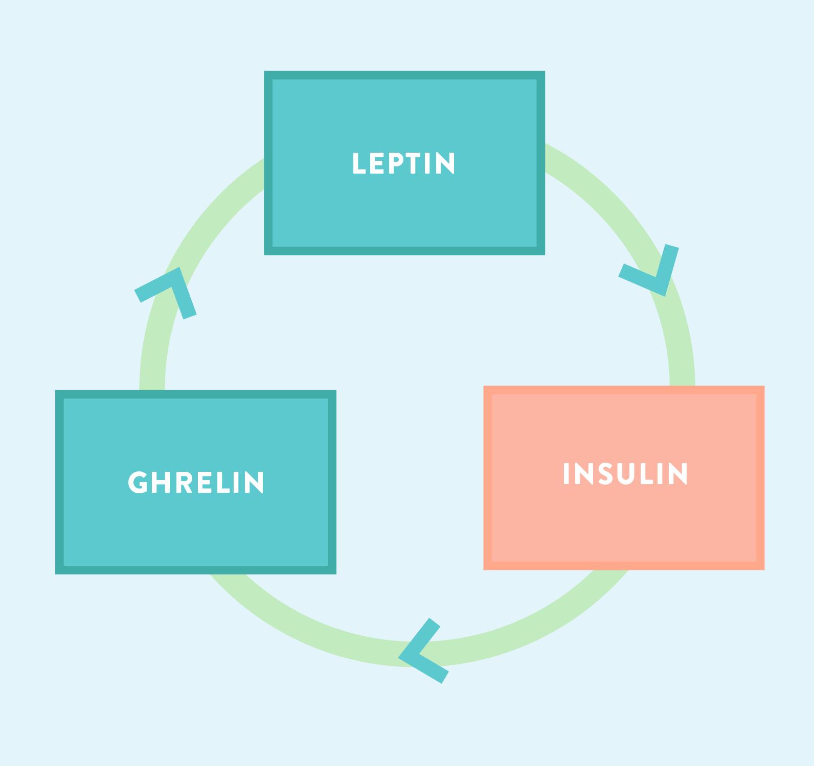 leptin insulin ghrelin