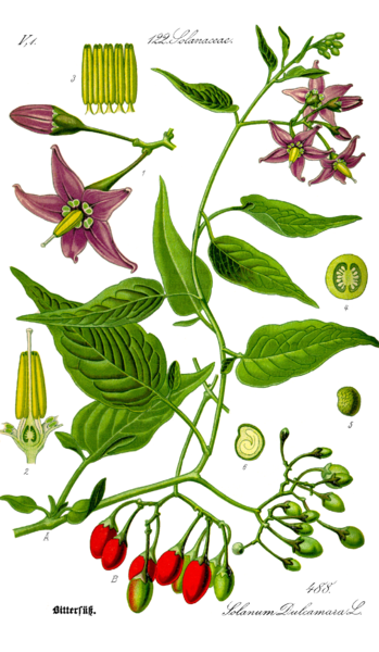 list of nightshade vegetables dictionary