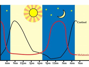 Regulating Circadian Rhythm (and why that's important)