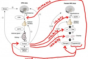 HPA vs HPG 2