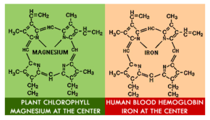 heme-chlorophyll-bad