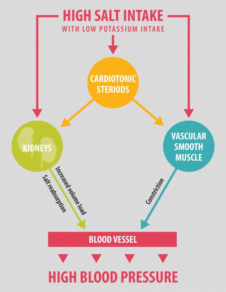 salt and hypertension relationship