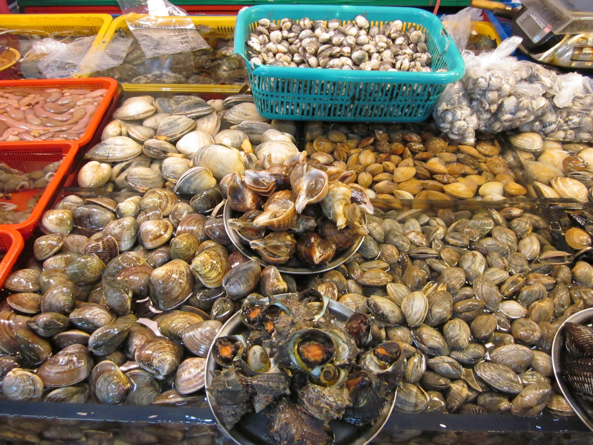 shellfish: oysters, clams & mussels - are they toxic or nutritious?