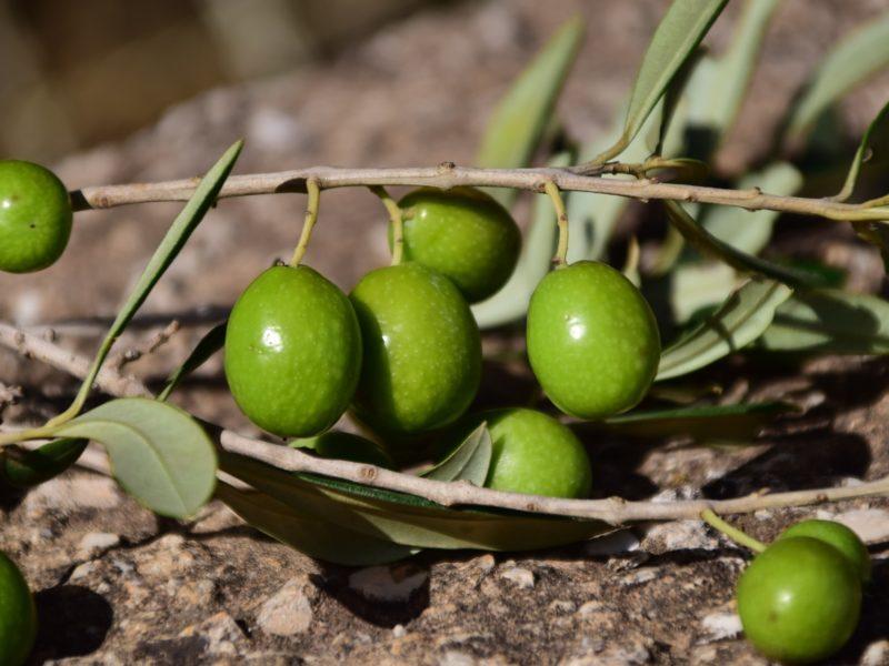 Sodium Olives