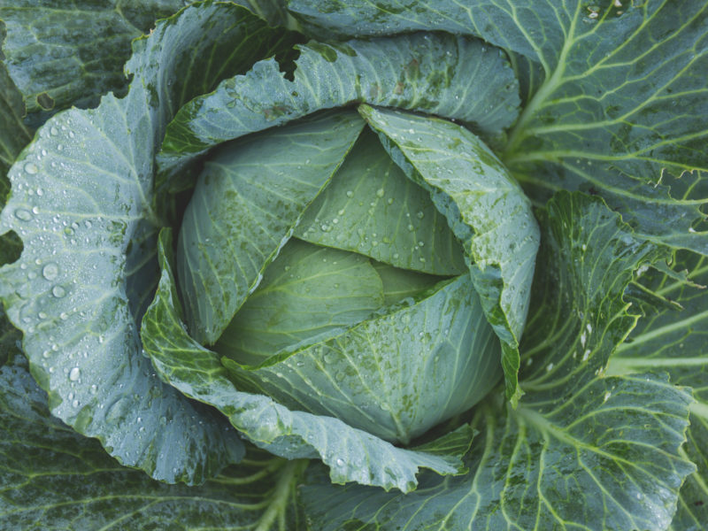 Vitamin B9 Leafy Greens