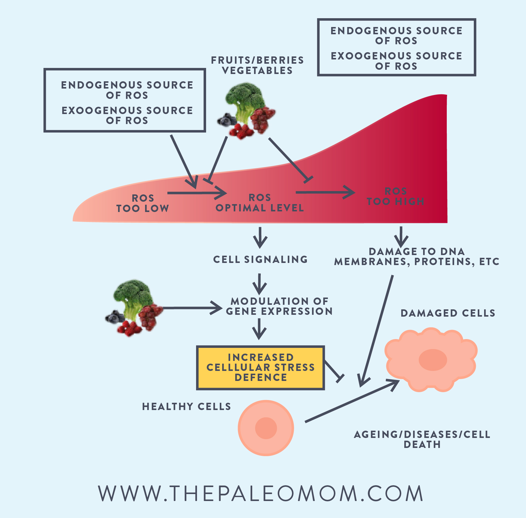 Healthy weight loss with paleo part 1 modifying dietary choices phytonutrients are important for overall health but they are absolutely essential while someone focuses on their weight loss the reason is really simple nvjuhfo Images