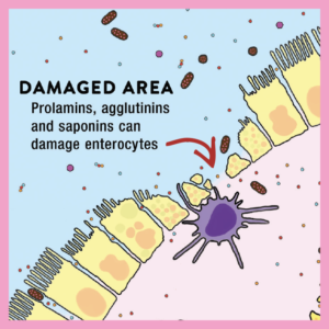 damaged areas in the gut