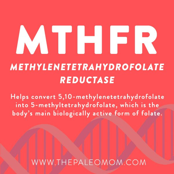 Genes to Know About: MTHFR ~ The Paleo Mom