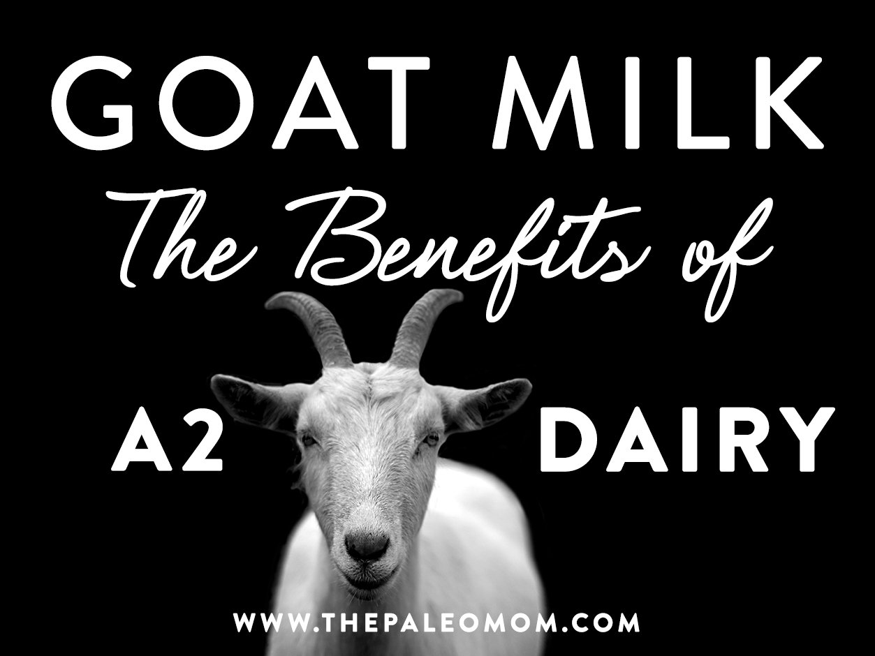 image of goat and the benefits of A2 Dairy