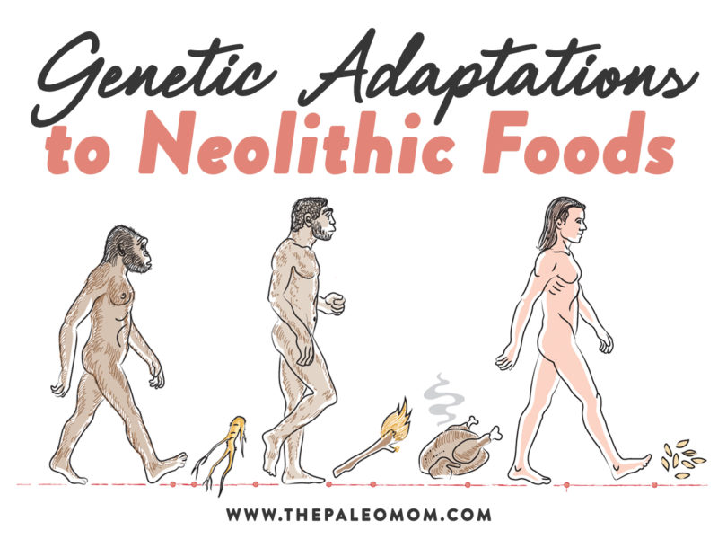 neolithic foods