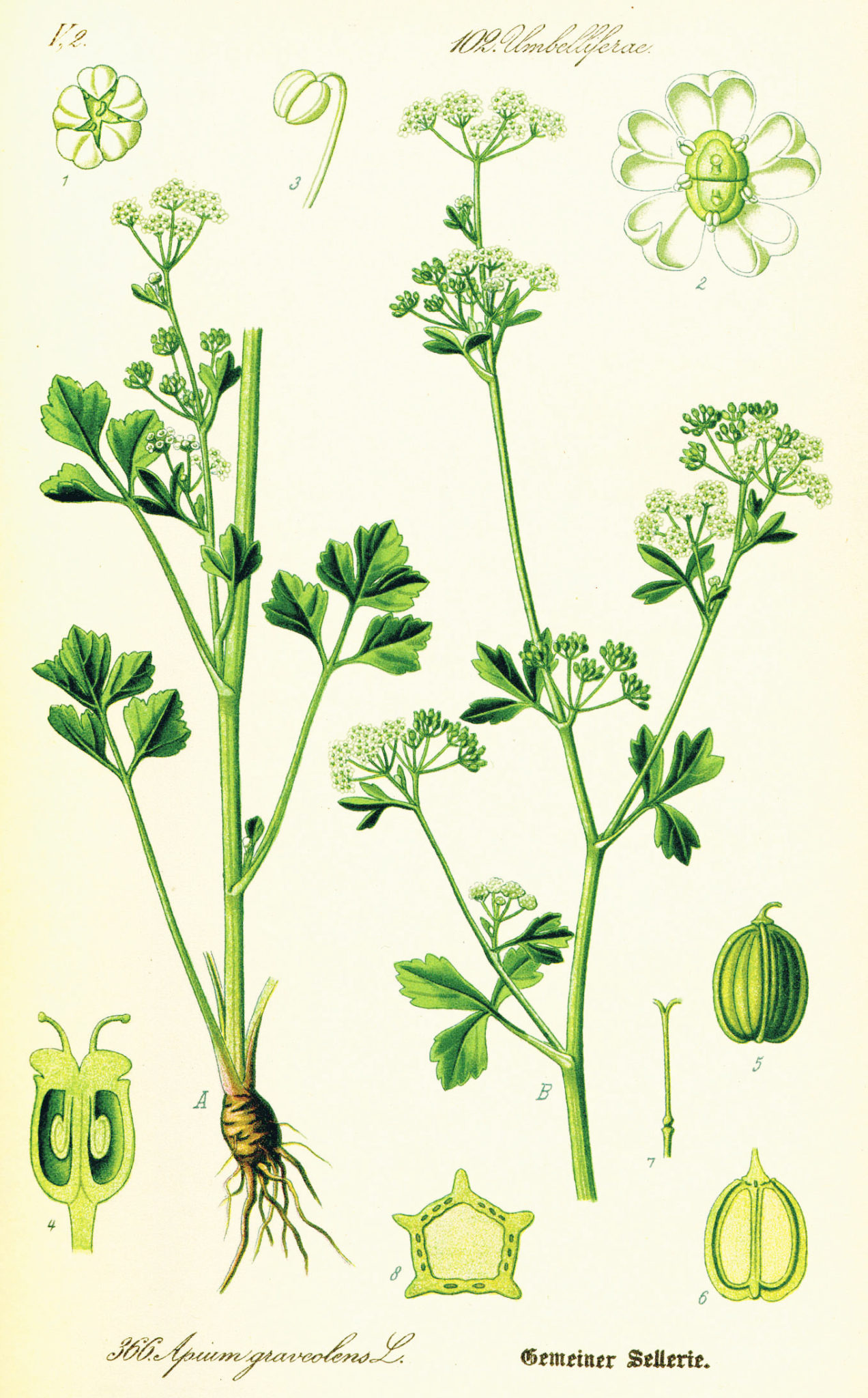 Celery Juice: Fad or Fabulous? ~ The Paleo Mom